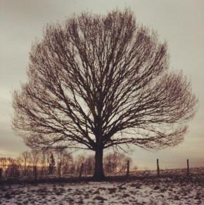 Winterwandeling langs de bevroren Lesse inGendron