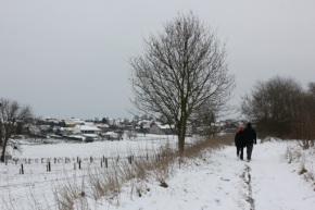 Kruisborre in desneeuw