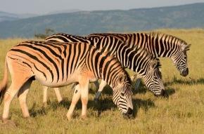 Zuid-Afrika 2013 – Dag 7 – Nijlpaarden in St.Lucia