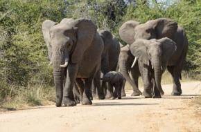 Zuid-Afrika 2013 – Dag 5 – Toeren inKruger
