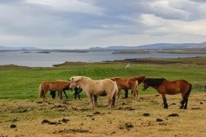 IJsland 2013 – dag 8 – stranden, rotte haai enzeehonden