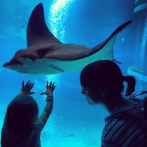 Japan 2017 – dag 6 – Osaka aquarium en een verfrissendeplensbui